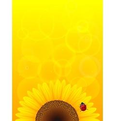 Sunflower and ladybird vector
