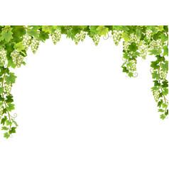 White grape floral frame vector