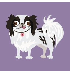 Japanese chin of a dog vector