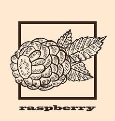 hand drawn raspberry vector image vector image