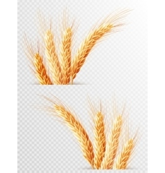 Two wheat ears isolated eps 10 vector