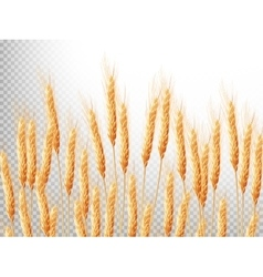 Ears of wheat EPS 10 vector image vector image