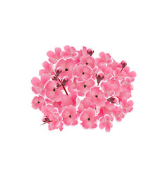 sakura bouquet of pink cherry flowers isolated vector image vector image