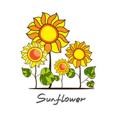 Sunflowers and green leaves vector