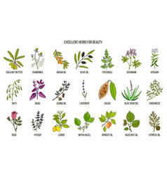 Best herbs for beauty care vector