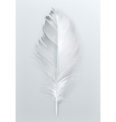 Bird feather icon vector image vector image