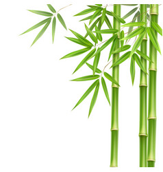 green bamboo stems vector image vector image