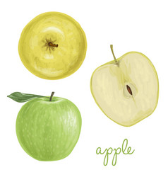 hand drawn apple vector image