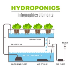 Infographic Hydroponic vector image vector image