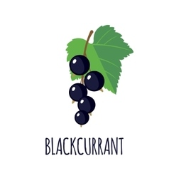 Blackcurrant icon in flat style vector
