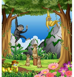 Monkeys and meerkats in the forest vector