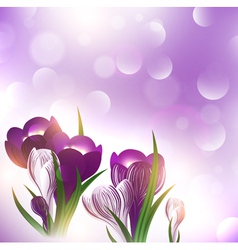 Crocus flower over bright background vector