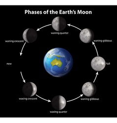 Phases of the earths moon vector