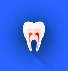 Flat structure of tooth icon vector