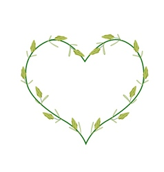 Fresh cardamon pods in a heart shape vector