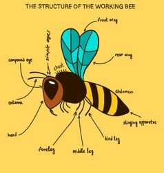 The structure of the working bee doodle vector