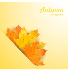 Autumn background with realistic maple leaves vector