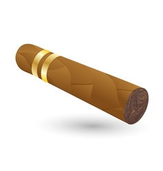 cigar on white vector image vector image
