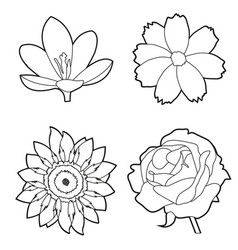 Spring nature design vector