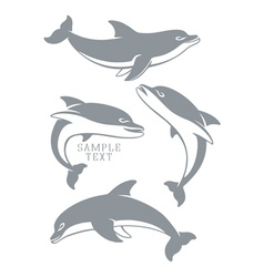 dolphins set vector image