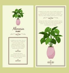 Greeting card with alocasia planton vector