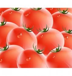 tomatos vector image