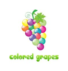 colored-grapes vector image vector image
