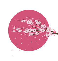 cherry blossom realistic japan vector image