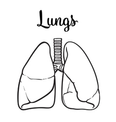 lungs of a healthy person chitsye vector image