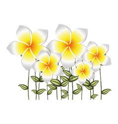 Watercolor silhouette set of white malva flowers vector