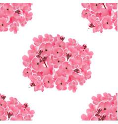 sakura bouquet of pink cherry flowers isolated vector image