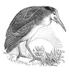 Night Heron vintage engraving vector image vector image