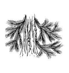 Beautiful tree trunk i vector
