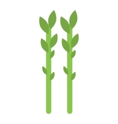 Fresh green asparagus on white vector