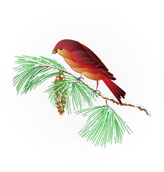 bird crossbill on a snowy pine branch vector image
