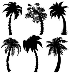 Set of tropical palm silhouettes vector