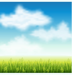 Summer field of grass vector