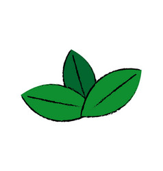Fresh green mint leaves herbal drink icon vector