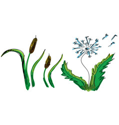drawn colored flower and reed vector image