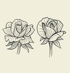 flower set of rose vector image