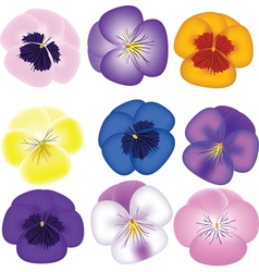 Pansies set vector