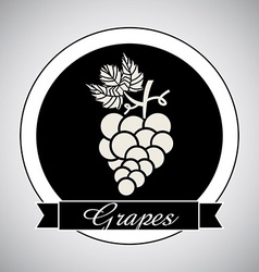 grapes design vector image