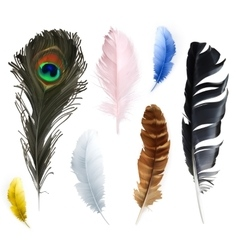 Feathers icons vector
