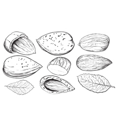 Coconut on white background isolated nuts vector