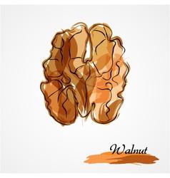 Walnut half vector