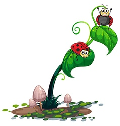 A plant with bugs vector