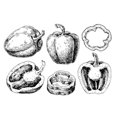 Pepper hand drawn set Vegetable engraved vector image vector image