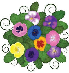pansies bouquet vector image
