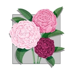 Watercolor lettering Bouquet of peony flowers vector image vector image