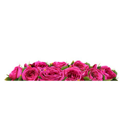 Roses flowers festive border congratulation vector